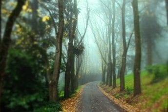 Wombat-Hill-Botanic-Gardens-Daylesford-Visit-Hepburn